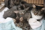kittens, cats at longmont humane society