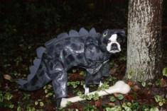 """Chloe as """"Doggosaurus."""""""