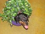 dog dressed in chia pet halloween costume