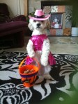 pink cowgirl dog halloween costume