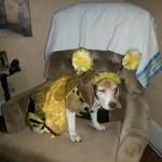 dog in bumblebee halloween pet bee costume