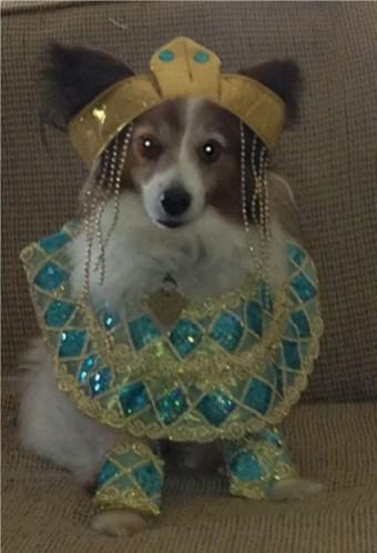 Lana as Cleopatra!