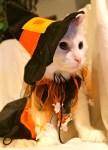 witch cat halloween costume