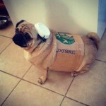 PET HALLOWEEN COSTUME, DOGS AND PUPPIES IN COSTUME, STARBUCKS, pug dressed up as Starbucks cup