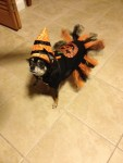 witch dog halloween pet costume