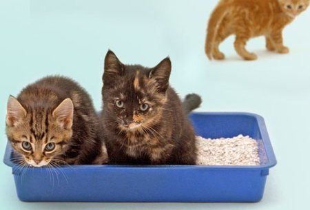Two kittens hanging out together in their litter box. Photocredit: www.pets.webmd.com