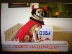 Pritzi Devil dog costume