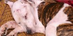 Puppy Doe rescued dog