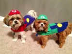Roxy Koko dogs as mario and luigi super mario bros