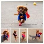 Superdog SuperCooper halloween costume