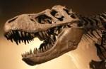 T-rex skull skeleton