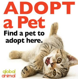 Adopt a pet, rescue a cat, dog, puppy or kitten