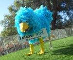 dog as twitter blue bird dressed in halloween costume