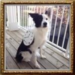 watchdog dog with clock halloween costume