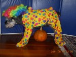 clyde the dog in clown halloween costume