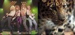 Rock band Def Leppard (on left) and a leopard (on right). Photo Credit: last.fm & scienceblogs.com