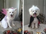 halloween pet costume contest dog winners