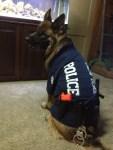 german shepherd dog wearing police cop halloween costume