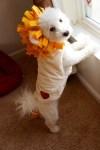 lion dog halloween pet costume
