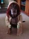 dog in yoda halloween star wars pet costume
