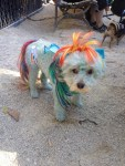 Duncan as Rainbow Dash from My Little Pony.