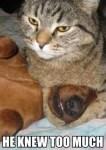 cat holds dog, funny meme
