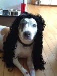 dog as paul stanley from kiss halloween pet costume