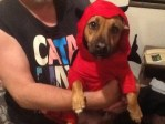 dog in red hoodie halloween costume