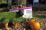chia pet halloween dog costume