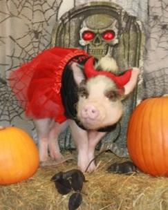A little deviled ham!