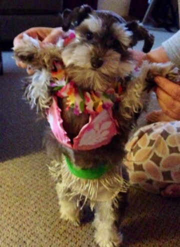 Zoey dressed for a Hula dance and ready for a trip to Hawaii!
