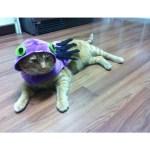 cat wearing halloween costume