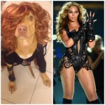 dog in Beyonce halloween costume
