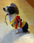 dog as woody toy story halloween costume