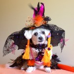 dog as good witch halloween costume