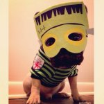 PET HALLOWEEN COSTUMES, DOGS AND PUPPIES IN COSTUMES, FRANKENSTEIN, French Bulldog in a frankenstein costume