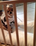 dog in jail, prisoner pet halloween costume