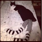 Cat in striped tights.