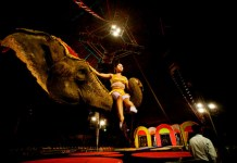 elephants, circus, circus elephants, rambo circus, animal abuse, animal cruelty, circus animals