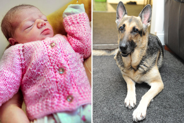 German Shepherd saves an abandoned baby girl, both named Jade.