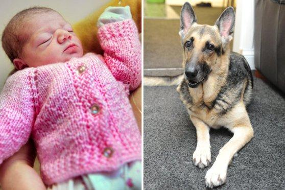 German Shepherd saves an abandoned baby girl, both named Jade.