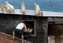 Dogs, Puppies, Typhoon, Animals, Natural Disaster, Philippines