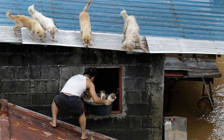 Philippines typhoon: Dogs, Puppies, Animals in Natural Disaster