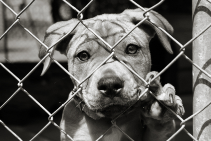 dogs, animal testing, pets, animal cruelty, animal abuse, science, humane society