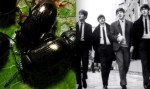 feature the beatles