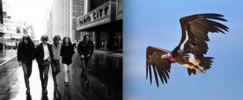 Rock band The Byrds formed by Roger McGuinn (guitar - vocals), Chris Hillman (bass - vocals), David Crosby (guitar - vocals) Gene Clark (vocals - percussion) and Mike Clark (drums) (on left) and a vulture in flight (on right). Photo Credit: Last.fm & Johan Swanepoel