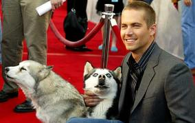 paul walker and eight below husky dogs