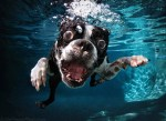 Seth Casteel's Underwater Dogs photographs are celebrated by the Animal History Museum.