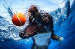 Seth Casteel photo, underwater dog Border Collie