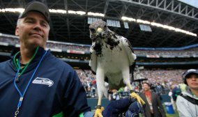 seahawks, taima the hawk, hawks, seattle, seahawks mascot, mascots